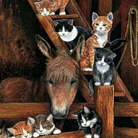 Domestic Shorthair Cat for adoption in Lexington, Kentucky - Barn Cats - ALL sizes & colors