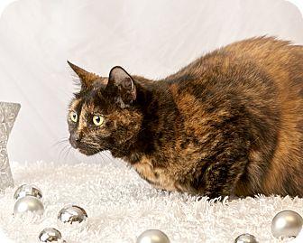 Calico Cat for adoption in Harrisonburg, Virginia - Minnie