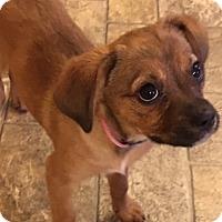 Adopt A Pet :: Tina - Bedminster, NJ