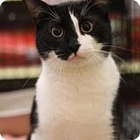 Adopt A Pet :: Sly - Sacramento, CA