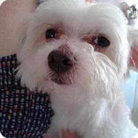 Adopt A Pet :: Parker - Covina, CA