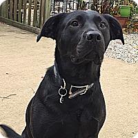 Adopt A Pet :: Cole - Toms River, NJ