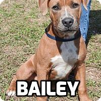 Adopt A Pet :: Bailey - Tampa, FL