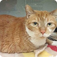 Adopt A Pet :: CHEDDAR - Pittsburgh, PA