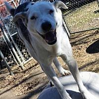Adopt A Pet :: D.D. - Quinlan, TX