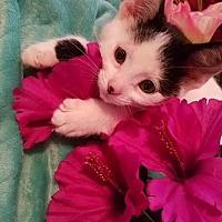 Adopt A Pet :: Persis - Ortonville, MI