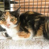Adopt A Pet :: Jay - Fredericksburg, TX