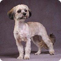 Adopt A Pet :: Rose - League City, TX