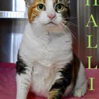 Adopt A Pet :: Hallie - Port Hope, ON