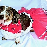 Adopt A Pet :: Sadie - Litchfield Park, AZ