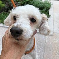 Adopt A Pet :: Fozzy - Long Beach, NY