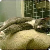 Adopt A Pet :: Arthur - Mission, BC