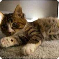 Adopt A Pet :: Gretchen - Davis, CA