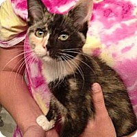 Adopt A Pet :: Renay - Troy, OH