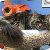 Adopt A Pet :: Tonya - Anchorage, AK