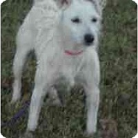 Adopt A Pet :: Cassie in Houston - Houston, TX