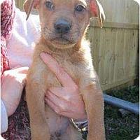 Adopt A Pet :: Sampson - Arlington, TX