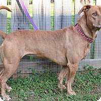 Adopt A Pet :: Jade - Woodbine, MD