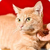 Adopt A Pet :: Hemingway - Athens, GA