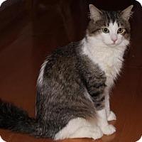 Adopt A Pet :: Winston - Hamilton, ON