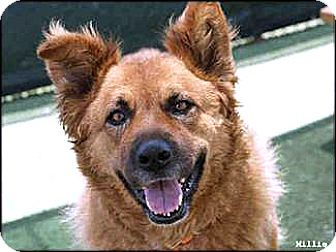 Retriever (Unknown Type) Mix Dog for adoption in Vista, California - Millie
