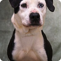 Adopt A Pet :: Jade - Newnan City, GA