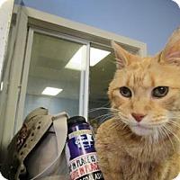 Adopt A Pet :: Russel - Northfield, MN