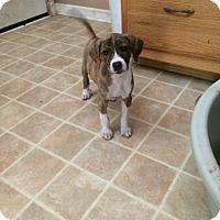 Adopt A Pet :: Fancy Pants - Hohenwald, TN