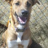 Adopt A Pet :: LUNA - Cleveland, MS