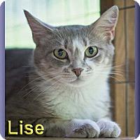 Adopt A Pet :: Lise - Aldie, VA