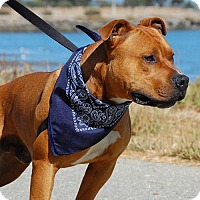 Adopt A Pet :: Brandon - Burlingame, CA