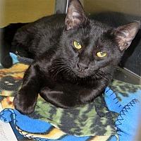 Adopt A Pet :: Vaan - Indiana, PA