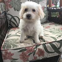 Adopt A Pet :: Jada - Toronto, ON