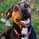 Adopt A Pet :: Remy