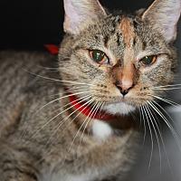 Adopt A Pet :: KITTY - Clayton, NJ