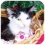 Photo 1 - Domestic Longhair Cat for adoption in Taylor Mill, Kentucky - Maggie