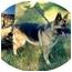 Photo 3 - German Shepherd Dog Dog for adoption in Baldwin, New York - Roxy