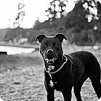 Adopt A Pet :: CHANCE - Kingston, WA