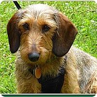 Adopt A Pet :: Jiggs - Toronto, ON