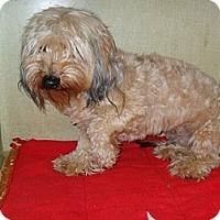 Adopt A Pet :: Tad #5206 - Jerome, ID