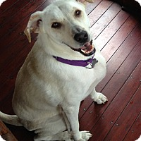 Adopt A Pet :: TJ - Knoxvillle, TN