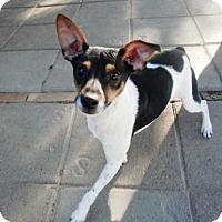 Adopt A Pet :: Diego - Silsbee, TX