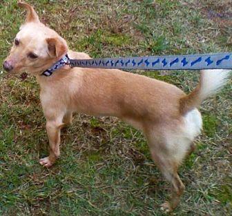 Spitz (Unknown Type, Medium) Mix Dog for adoption in Lawrenceville, Georgia - Shep