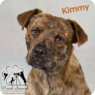 Mountain Cur Mix Dog for adoption in Broadway, New Jersey - Kim (needs foster)