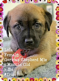 German Shepherd Dog Mix Puppy for adoption in Beaumont, Texas - Lola