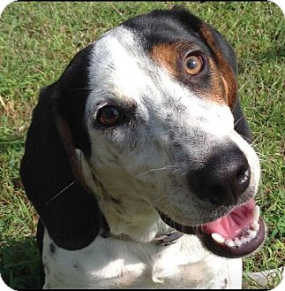 Hound (Unknown Type) Mix Dog for adoption in Huntsville, Alabama - Otis