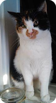 Calico Cat for adoption in Woodstock, Virginia - Bucket