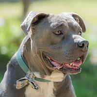 Adopt A Pet :: Winston - La Jolla, CA