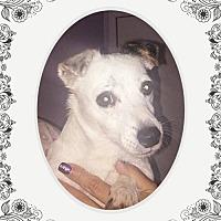 Adopt A Pet :: Dotty - San Bernardino, CA