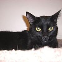 Adopt A Pet :: Hunter - Canoga Park, CA